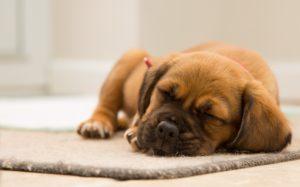 techniques de gestion de sommeil en entreprise via des ateliers de sophrologie en entreprise